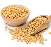 NON GMO SOYBEAN, SOYBEAN SEEDS, ORGANIC SOYBEAN SEEDS