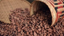 Quality Organic Cacao Nibs, Cocoa Beans, coffee beans Cheap Price
