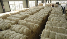 100% Natural Coir sisal fibre Best prices.