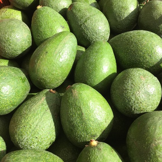 Hass and Fuerte Fresh Avocados affordable price ready for export now