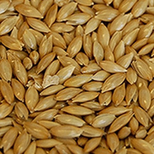 Canary Seed and Bird Mix Seed For Sale