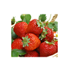 Flavoring Agent Food Additives Strawberry Flavor