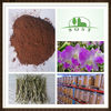 Boost Metabolism Dendrobium Nobile Extract