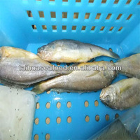 frozen seafood with quality flatfish types