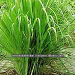 Lemongrass oil for Mosquito repellent