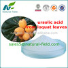 best quality ursolic acid loquat leaves extract