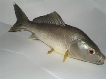 Fake Plastic Fish Buy Large Plastic Fish Decorative Fish