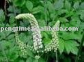 Black Cohosh Extract Triterpene