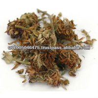 Red Clover herbal