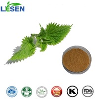 Factory Supply Natural Stinging Nettle Extract / Urtica Cannabinaa L. 10:1