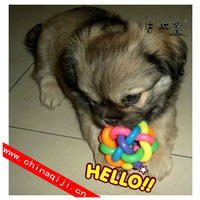 Hot sale promotion quality pet products colorful bell twisted toy ball dog toy