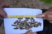 High quality sunflower seeds for confectionery