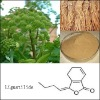 High Quality Angelica Root Extract for Drugs and Nutritional Supplements