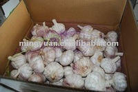 fresh Chinese jinxiang garlic 2016