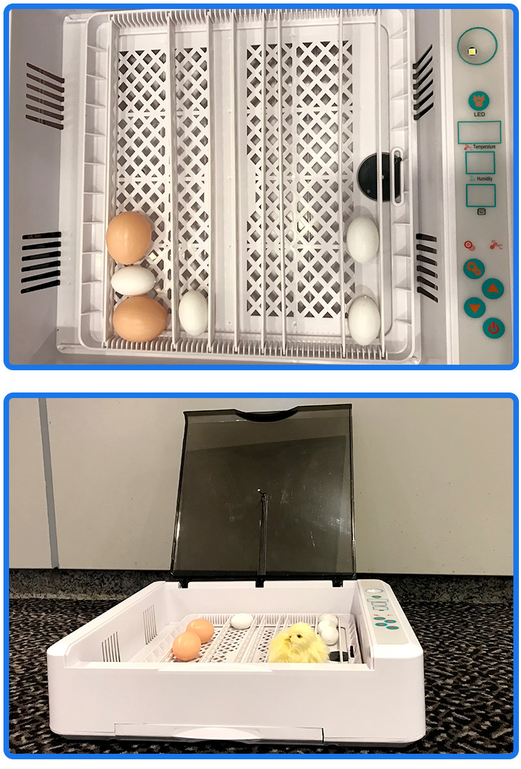 2019 New Arrival automatic chicken egg incubator 36 incubators hatching eggs with egg tester
