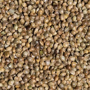Конопля семена на продажу количество конопли ук