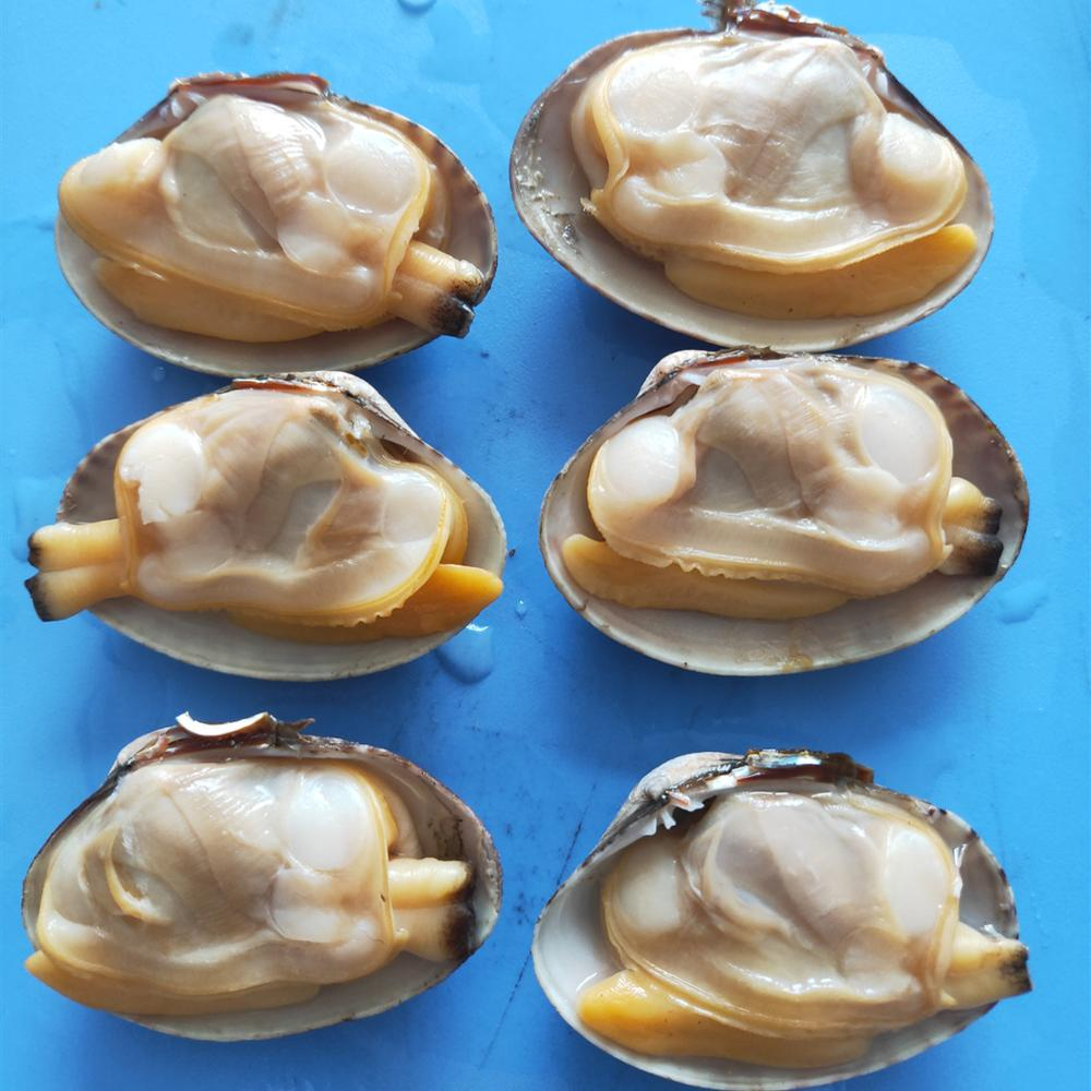 frozen fresh new boiled short necked clam with shell