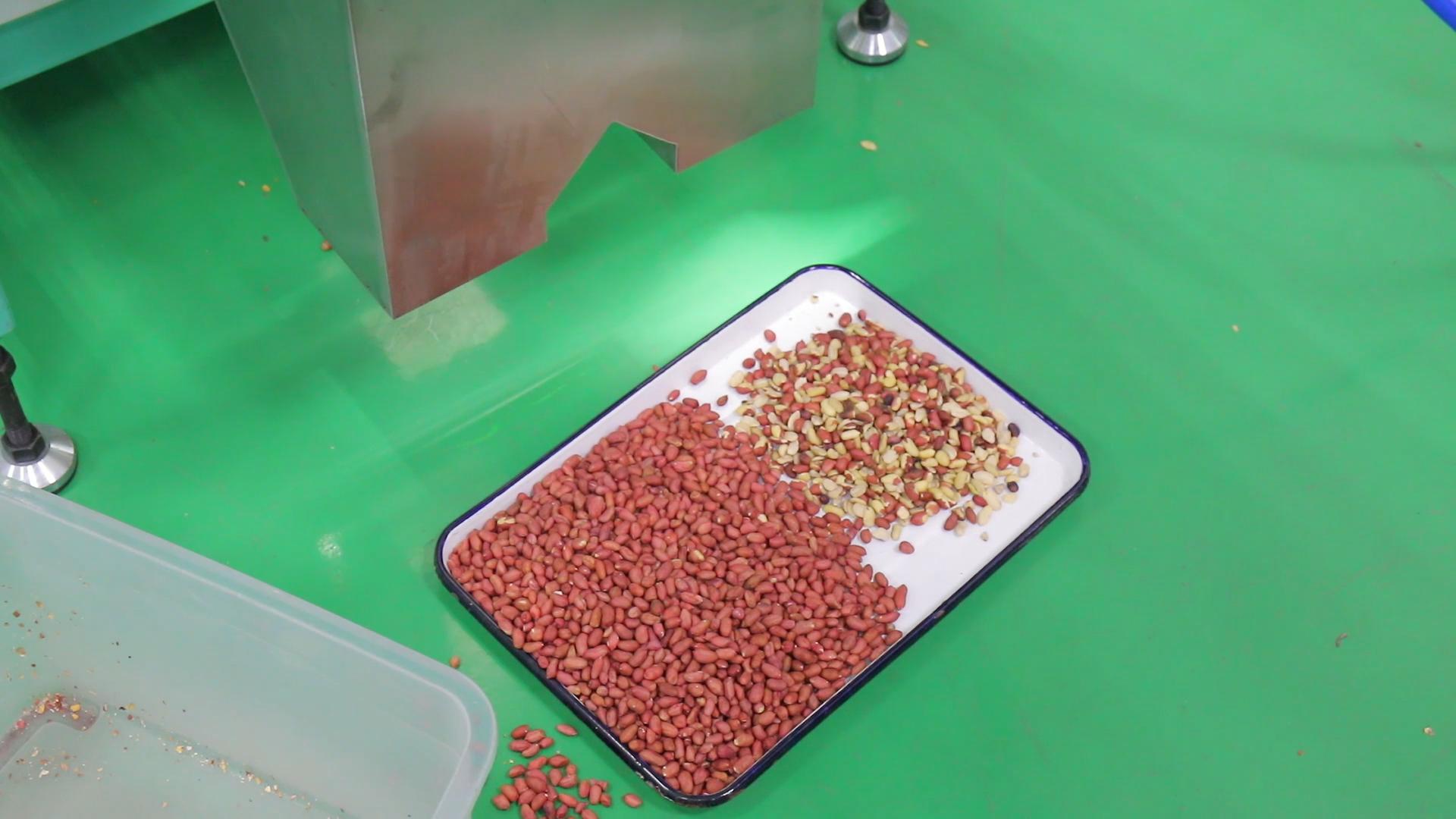 WYB4 kemer tipi kavrulmuş fıstık renk sıralayıcı makinesi ayırma fıstık kabuk olmadan
