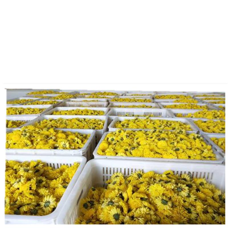 Hot Selling Dried TianMeng Chrysanthemum Flower Tea - 4uTea | 4uTea.com