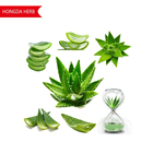 Hongda Factory Supply Aloe Vera Gel Freeze Dried Powder 200 1 Aloe Vera Gel Freeze Dried Powder Aloe Vera Gel Powder