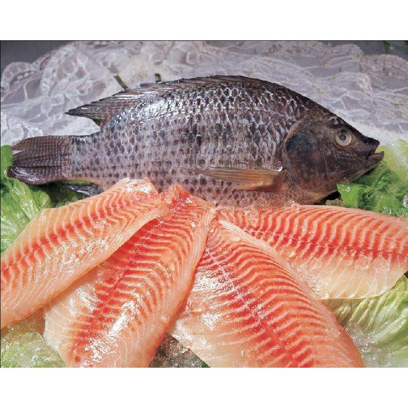 Harga Fillet Ikan Tilapia Frozen Pangandy