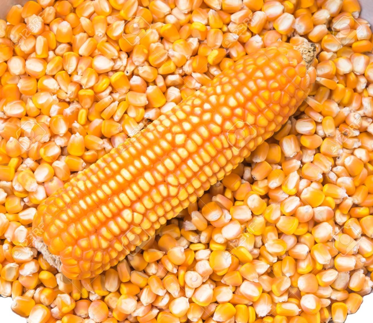 Non GMO Dried Yellow Corn
