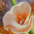 Custom Size Beautiful lily Still Life oil painting for Wall Decor