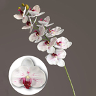 2020 New wedding home decorative flower white fake silk Phalaenopsis orchids flower 3D Print real touch latex artificial orchids