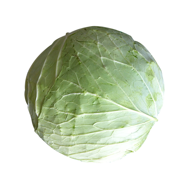 Chinese Asian Vegetable Green Fresh Chinese Cabbage Buy Chinese Cabbage Fresh Chinese Cabbage Green Chinese Cabbage Product On Alibaba Com