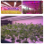 High quality good effect greenhouse Led plant grow light white 4FT Full spectrum T8 led grow tube lighting 36w 40w
