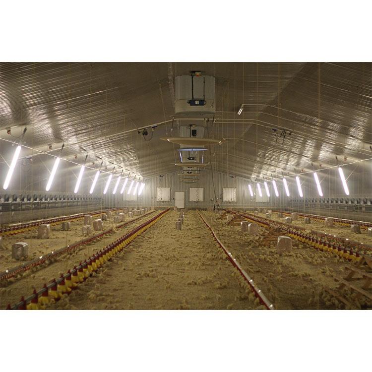 Pollo nidificazione sistema di posa pollo uovo nido di pollame disegno