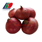 Superior 50MM 60MM 70MM Fresh Onion Red White, Specification, Buy Fresh Onion, Lowest Price Fresh Red Onion Oman Muscat Supplier