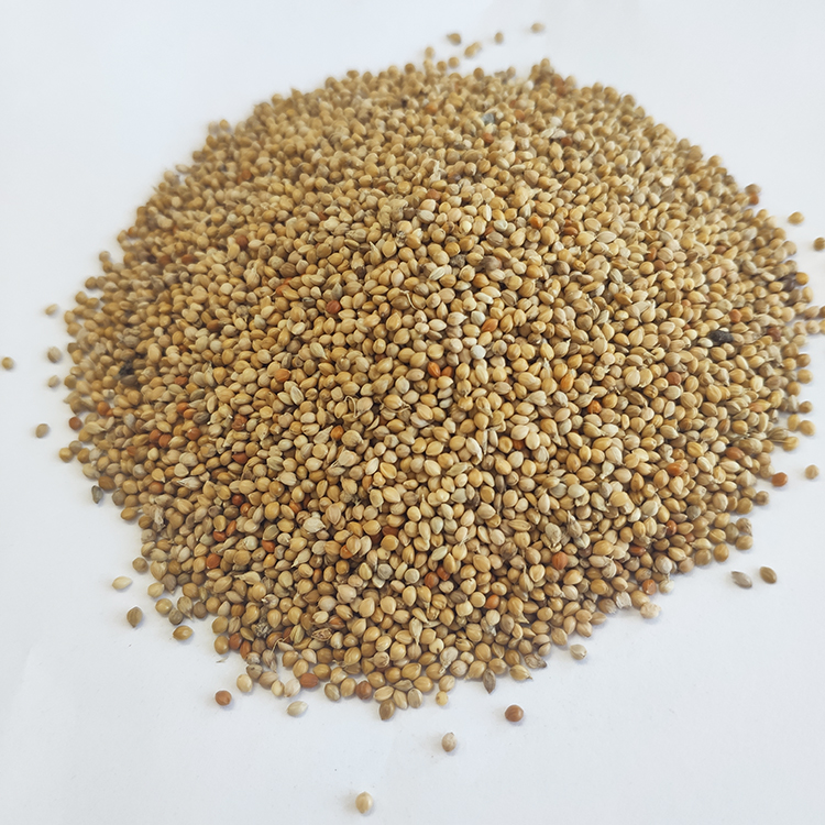 Nature Chinese yellow millet in husk For Bird Feeds