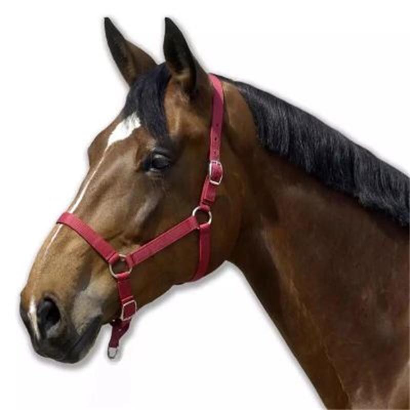 Caballo herradura equipo con caballo equipo de equitación