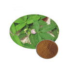 Herb [ Extract ] Natural Cosmetic Indredient Sensitiveplant Herb Extract Mimosa Pudica Extract Powder
