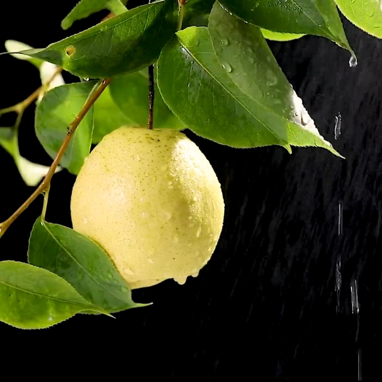 Chinese Ya/Early Su/Crown Pear