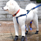Manufacturer wholesale multi-colors silicone waterproof anti slip pet dog rain shoes