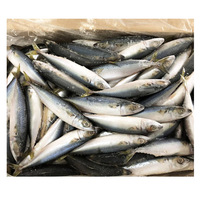 Pacific Marine Fresh Frozen Seafood Mackerel Fish WIth Cheap Price