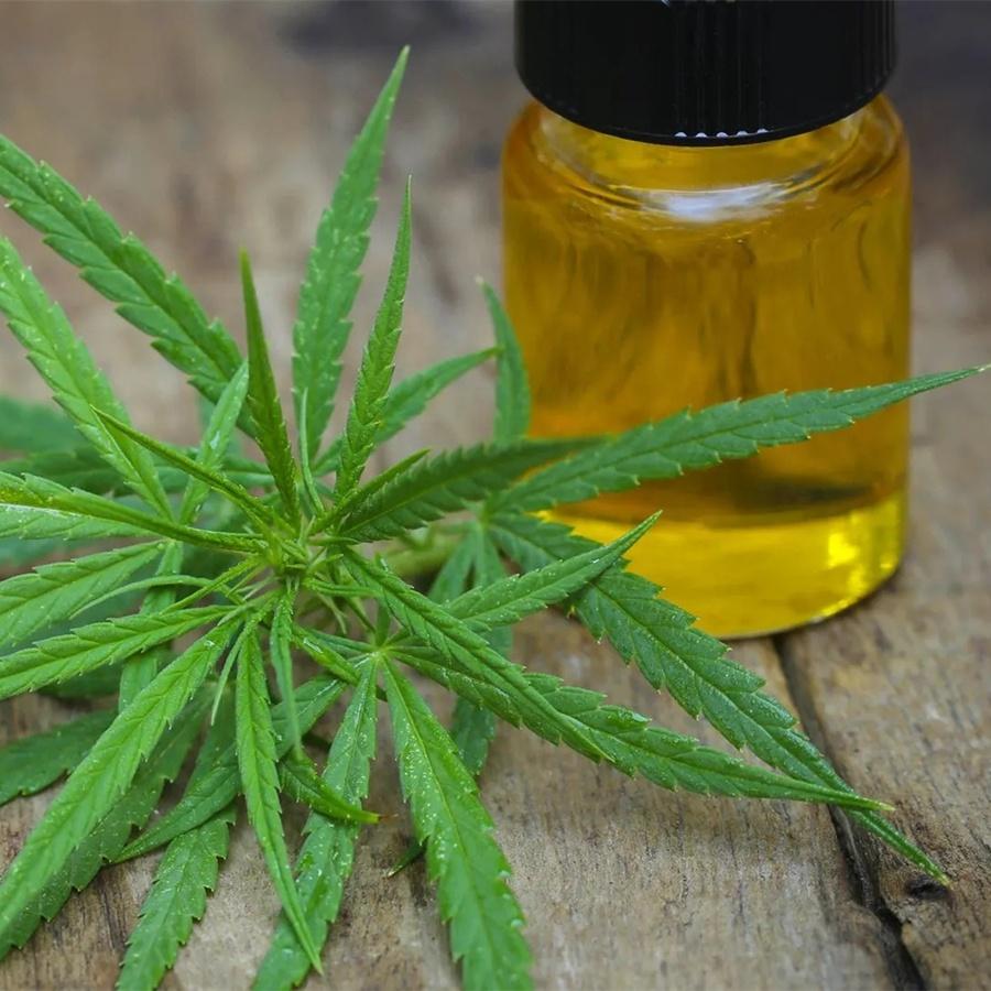 Масляной экстракт конопли разница между гашишем и марихуаной
