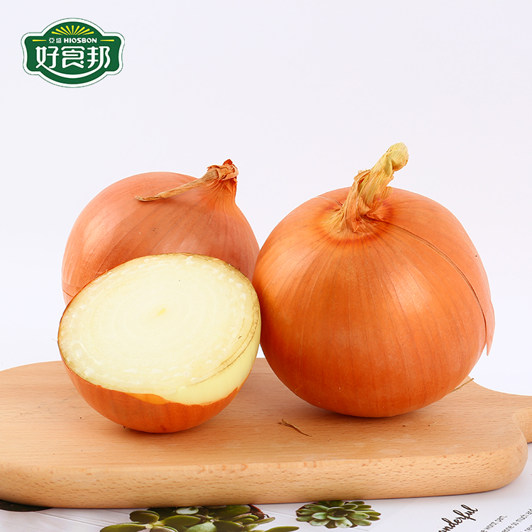 top fresh yellow onion wholesale with good market price
