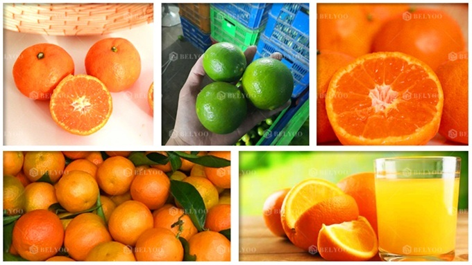 Fresh squeezed pink grapefruit extractor lime orange juice making processing machines automatic industrial citrus juicer