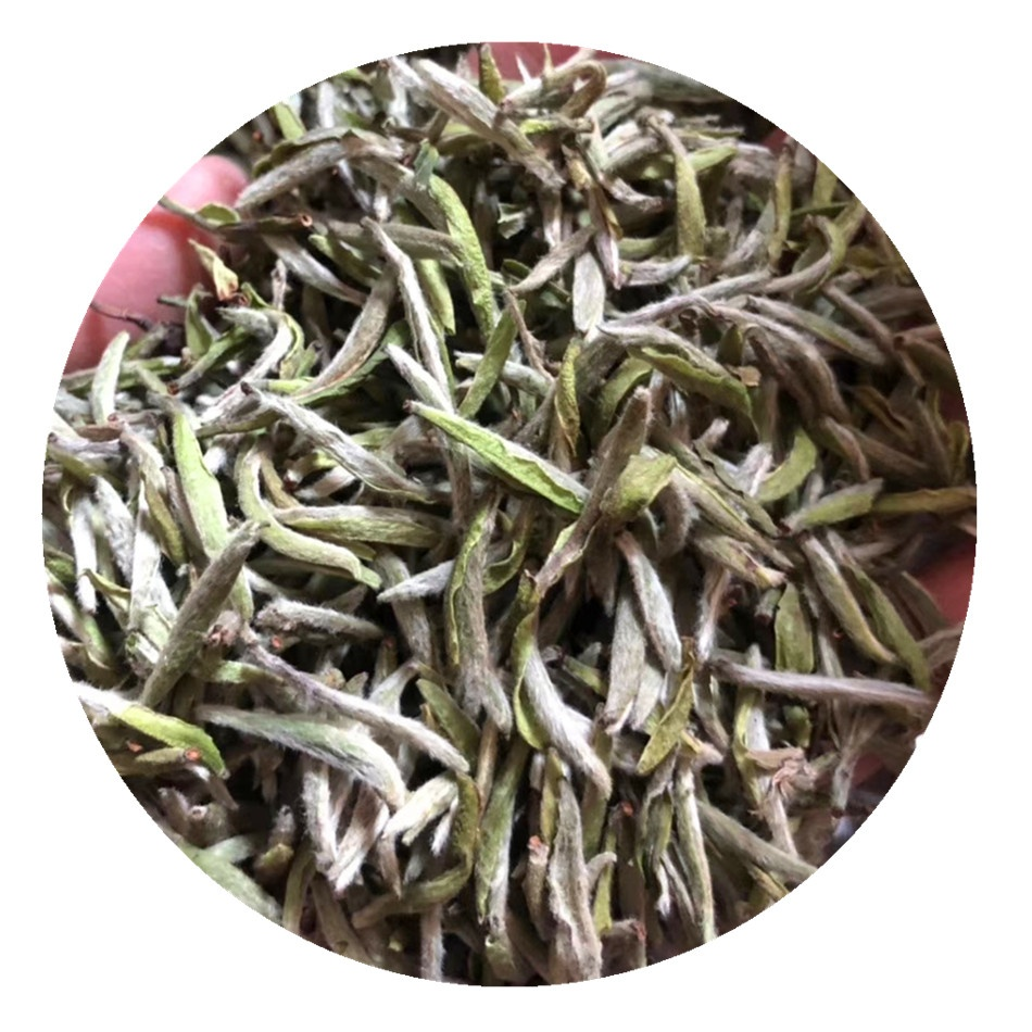 Full Pekoe White Tea Silver Needle Early Spring First Harvest Silver Needle White Tea Bai Hao Yin Zhen - 4uTea | 4uTea.com