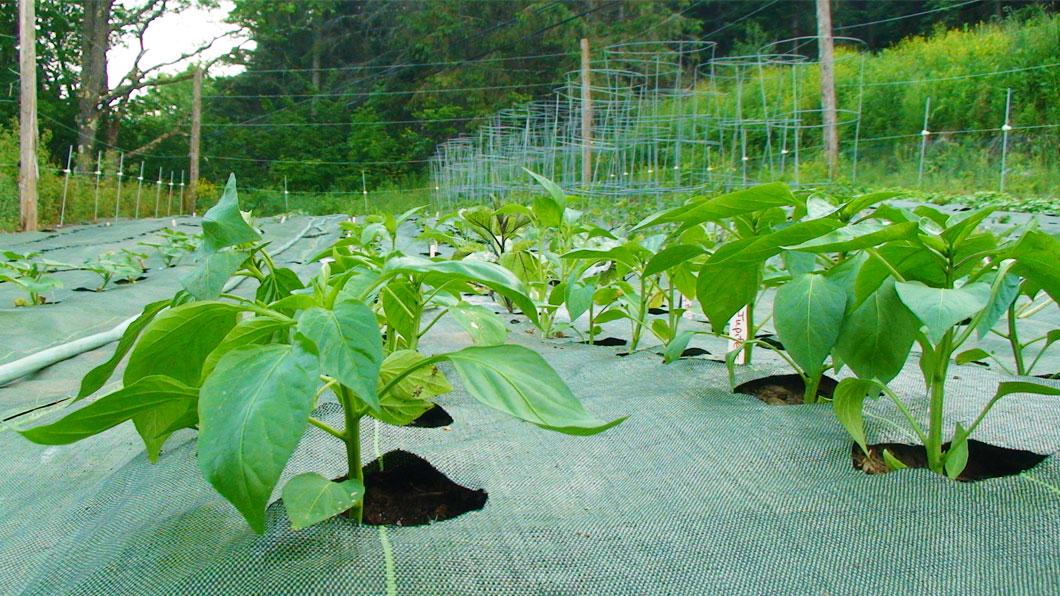 الزراعية السوداء تمنع نمو العشب أغطية واقية بلاستيكية غطاء الأرض