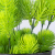 23CM Wholesales Pine Foliage Potted Plants Green Bonsai Pine Plants for Home Shop Office Decoration