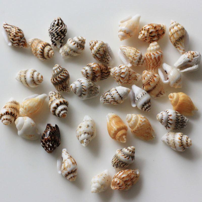 Красивые Морские Раковины 19-29 мм Mix 270 шт./пакет 500 г милые ремесла украшения задатки DIY материалы аксессуары