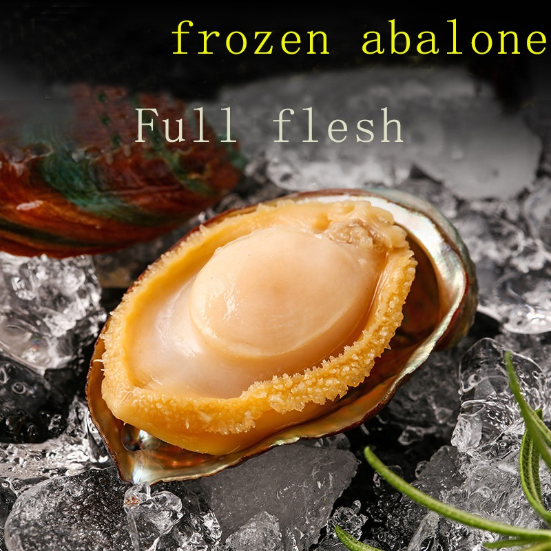 Hot-selling Nutritious fresh live shellfish Dried Abalone