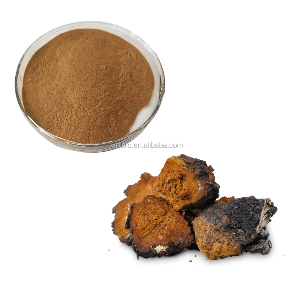 Hot Sale Natural Organic Chaga Mushroom Siberian Extract 100:1