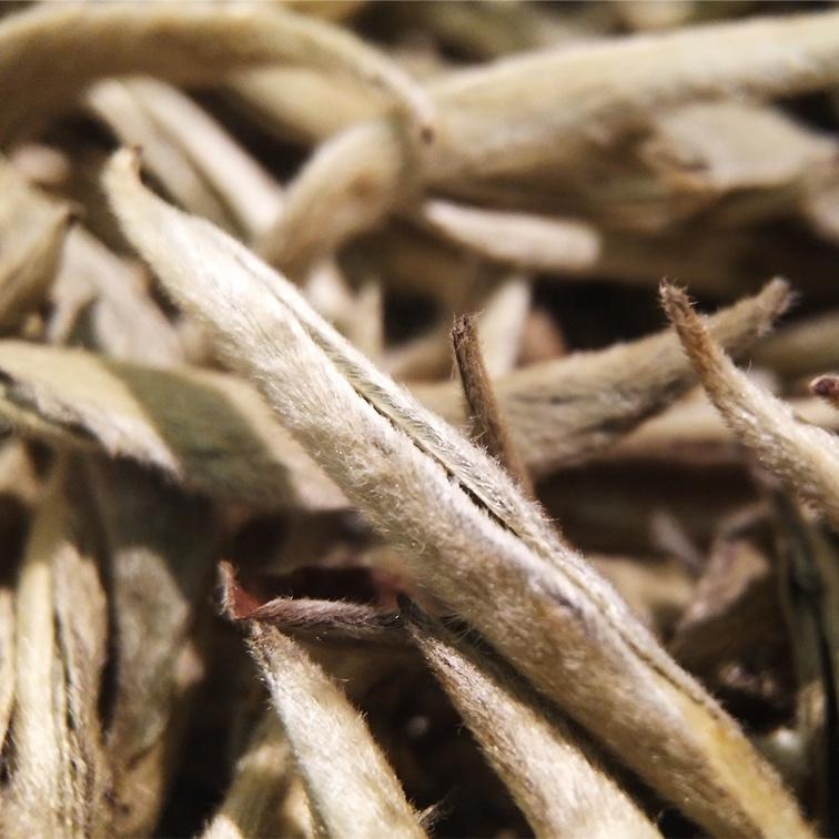 200g Best White Milli- Silver Needle Tea - 4uTea | 4uTea.com
