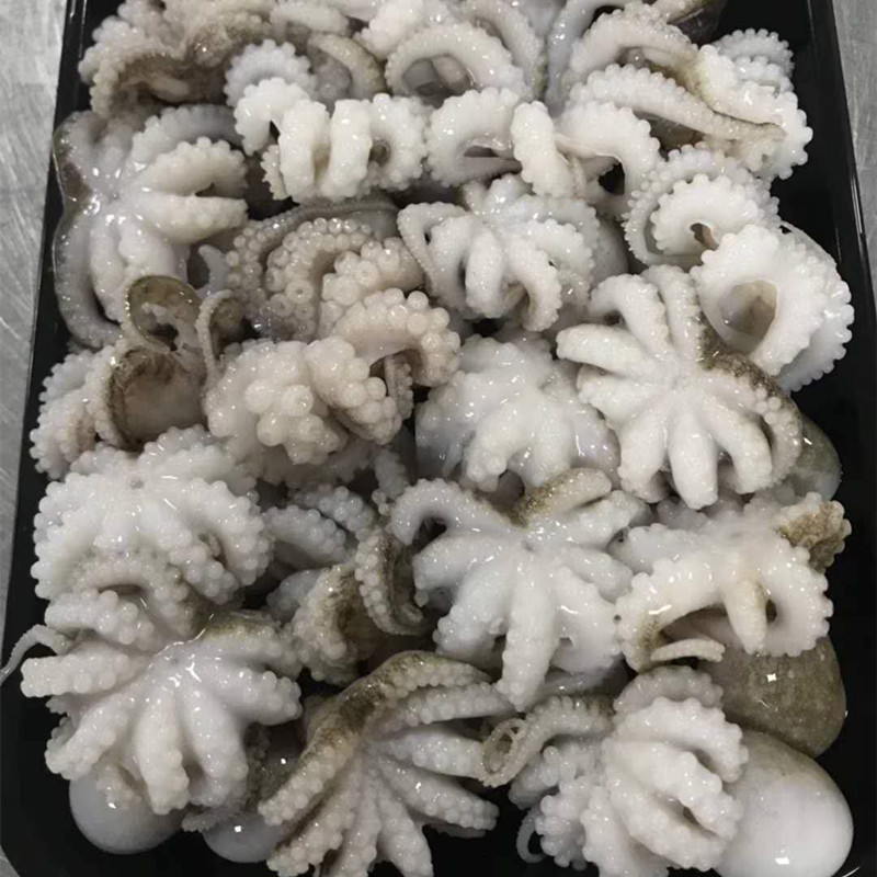 Frozen whole cleaned Octopus from vietnam headless haccp quality