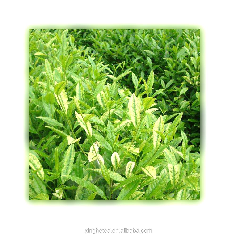 gift box Angie White Tea white organic green tea - 4uTea   4uTea.com